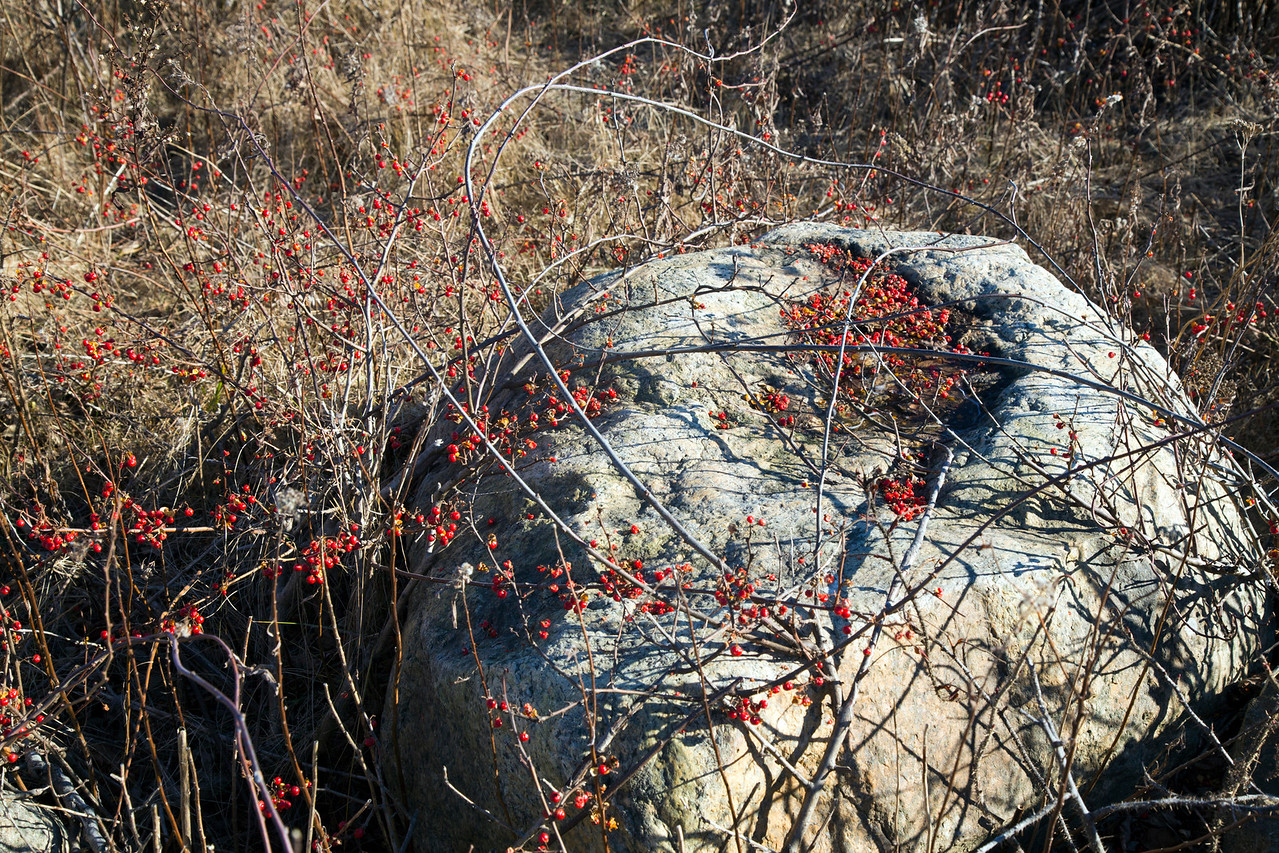 berries C4876