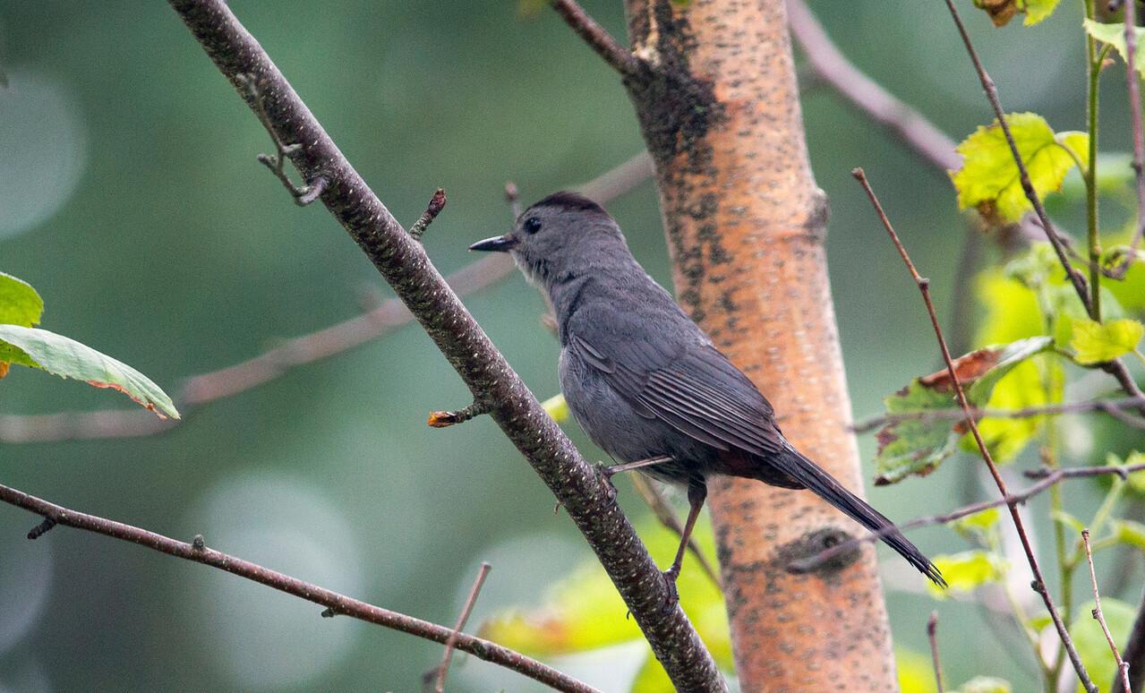 bird branches close C6582