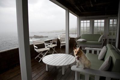 Porch dog C6139