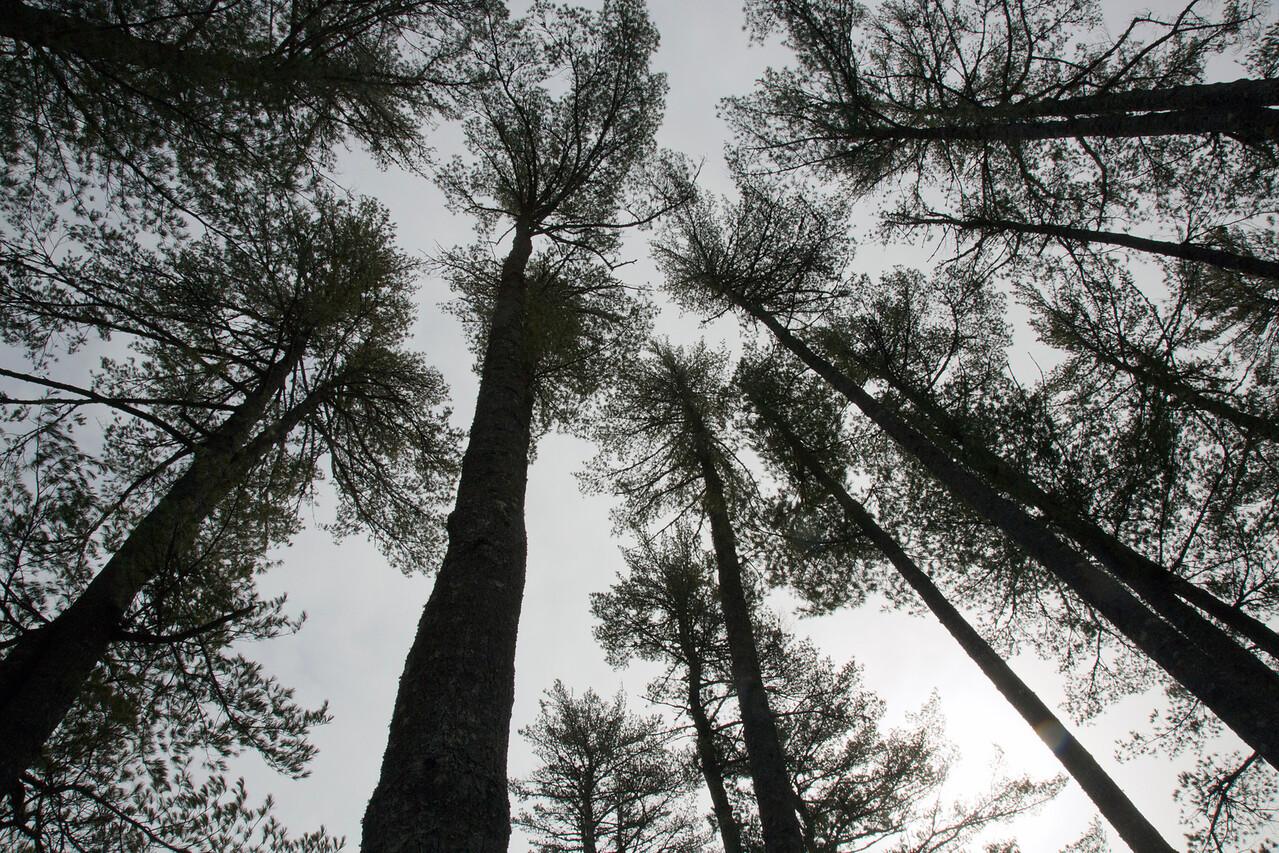 trees GC C2087