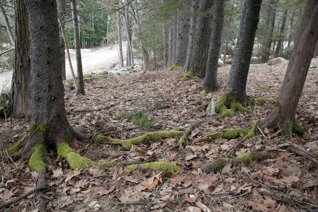 trees moss GC C2117