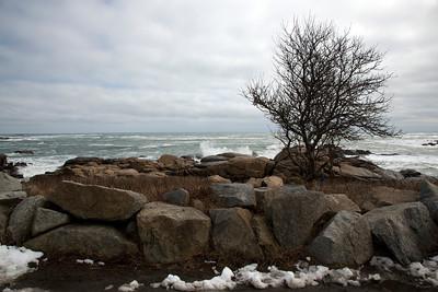 Tree ocean C1518