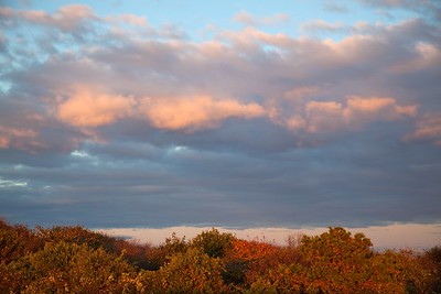 Bushes.Clouds.1445