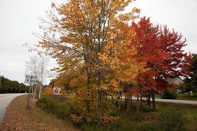 9.208.leaves.1064