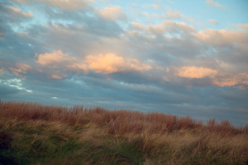 Grass.Clouds.1437