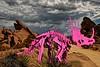 Pinkasaurus