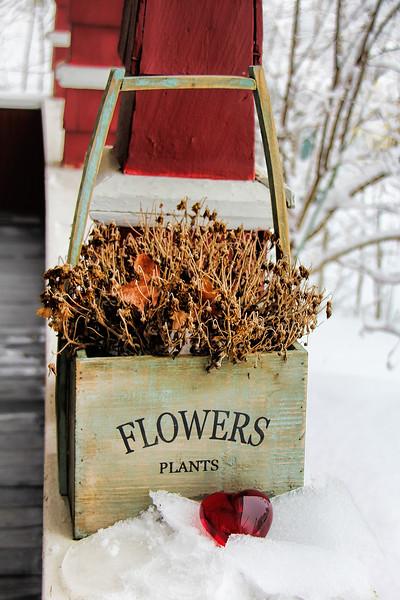 Frozen Heart and Dead Flowers