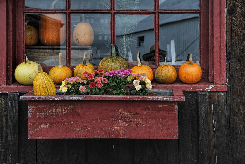 Brackett Orchards Window