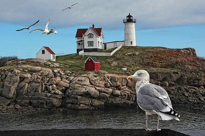 Seagulls & Lighthouse