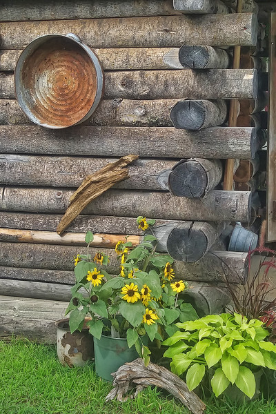Log Cabin and Flowers