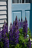 Lupines on a Blue Door, Monhegan Island, Maine