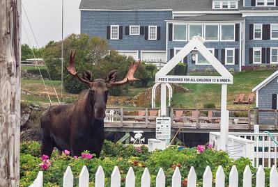 Moose BPYC crop 09732