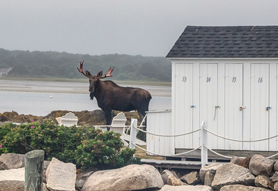 Moose BPYC 09730