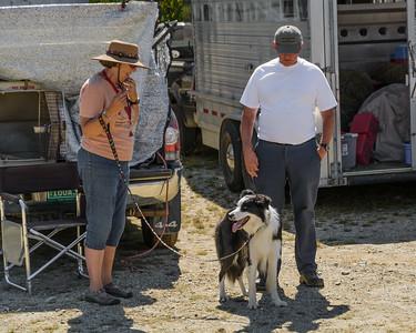 Sheep Dog Trials at the Blue Hill Fair