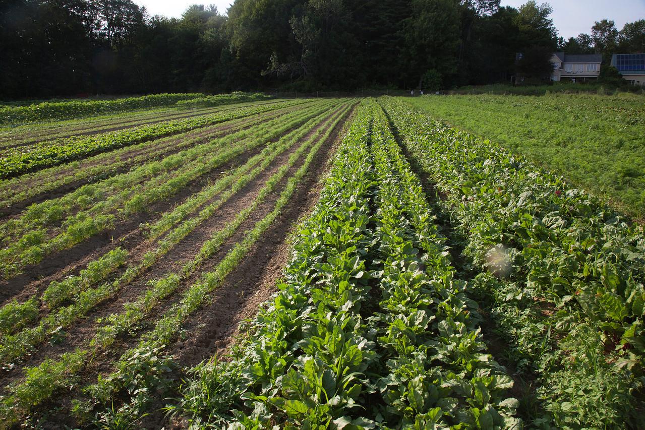 farm C7157