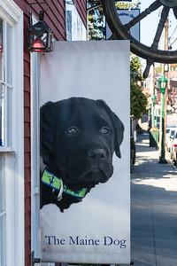 Pet store in Camden