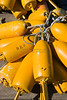 Yellow Lobster Buoys, Maine