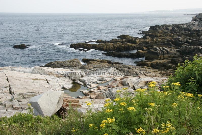Portland Lighthouse Area Rocks and Yarrow Flowers, Maine