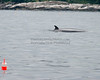 """""""Mickey Whale off the COast of New Harbor, Maine,"""" color photo"""