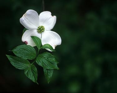 Backyard Flower1a