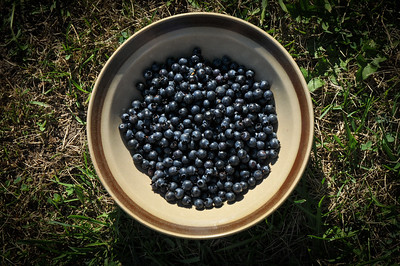 Blueberries I