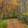 Sieur de Monts Jesup Trail, Acadia National Park, Mount Desert Island, Maine - October 2014