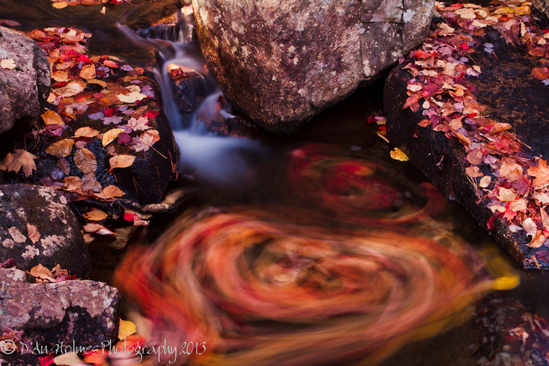 Swirling Leaves - Acadia National Park, Maine - October 2013 - D'An Holmes Glueckert