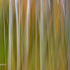 Abstract motion blur at Sieur do Monts Jesup Trail, Acadia National Park, Mount Desert Island, Maine - October 2014