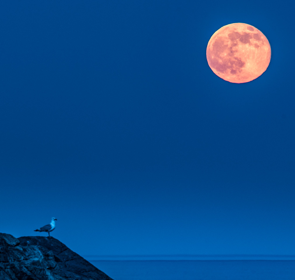 The Strawberry Moon & the  Seagull
