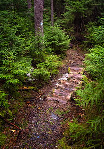Early Spring Trail, Boothbay, Maine  (31981)