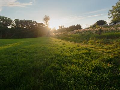 Summer Field, Brunswick, Maine  (40014)