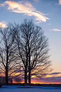 Bare Trees Sunset, Brunswick, Maine (78629)