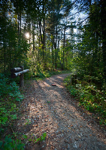 Sunlit Trail in the Woods (7263)
