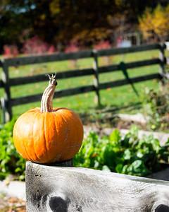 Pumpkin on Fence, Freeport, Maine  (300064)