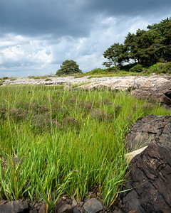 Marsh Grass and Rocky Shore, Timber Point, Biddeford, Maine  (00116)