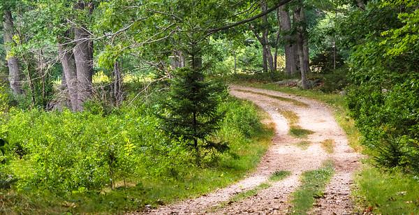 Timber Point Trail, Biddeford, Maine  (00102-H)