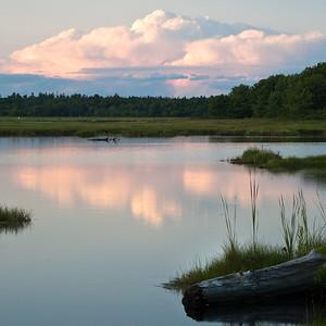 Wells Reserve, Wells, Maine (0543)