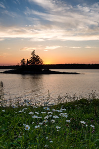 Daisies and Sunset, Harpswell, Maine (64754)