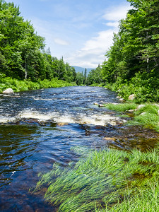 Summer Scene, Rangeley, Maine (70742)