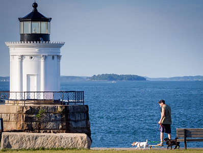 Dog-powered Skateboarder, South Portland, Maine (67125)