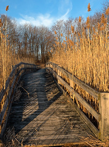 Boardwalk, Fore River Trail, Portland, Maine  (86647)