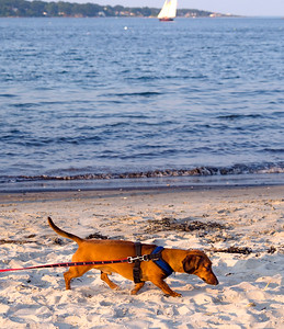 A Dog Beach, South Portland, Maine (86720)