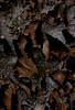 mushroom, fungus, Maine mushroom, fungus, Phippsburg, Maine
