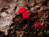 Possible Vanessa Vobis, mushroom, fungus, Maine mushroom, fungus, Phippsburg, Maine
