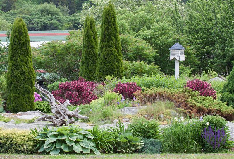 A Maine, coastal garden, Phippsburg, June