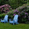 "periwinkle blue Adirondack chairs in a garden with purple rhododendrons, coastal Phippsburg Maine garden in early summer For more garden flowers of Maine visit <a href=""http://www.robinrobinsonmaine.com/MaineBOTANICALSwildflowers/BOTANICALS/13997293_xThqdt"">http://www.robinrobinsonmaine.com/MaineBOTANICALSwildflowers/BOTANICALS/13997293_xThqdt</a>"