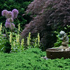 """Allim, yellow foxglove, digitalis grandiflora, Japanese maple, Inaba shidare and garden fountain of child holding fish in a sea of Bar Harbor juniper, Phippsburg, Maine coastal garden in June For more garden flowers of Maine visit <a href=""""http://www.robinrobinsonmaine.com/MaineBOTANICALSwildflowers/BOTANICALS/13997293_xThqdt"""">http://www.robinrobinsonmaine.com/MaineBOTANICALSwildflowers/BOTANICALS/13997293_xThqdt</a>"""