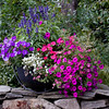 "This is a container of mixed annual flowers. The conatiner is an iron caldron. Each year, I put flowers that are left over from other things so there is always an unplanned assortment. This was a successful year. The flowers are pink impatiens, purple petunias, purple salvia and white allysum. For more garden flowers of Maine visit <a href=""http://www.robinrobinsonmaine.com/MaineBOTANICALSwildflowers/BOTANICALS/13997293_xThqdt"">http://www.robinrobinsonmaine.com/MaineBOTANICALSwildflowers/BOTANICALS/13997293_xThqdt</a>"
