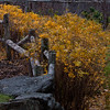"Funky fences with fall rosa rugosa foliage, Rockland Maine For more garden flowers of Maine visit <a href=""http://www.robinrobinsonmaine.com/MaineBOTANICALSwildflowers/BOTANICALS/13997293_xThqdt"">http://www.robinrobinsonmaine.com/MaineBOTANICALSwildflowers/BOTANICALS/13997293_xThqdt</a>"