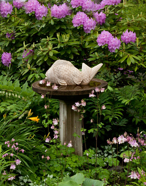 "marble fish sculpture in birdbath in my spring, coastal Maine garden, Rhododendron flowers, Solomon's Seal flowers, Pink Columbines and Daylily For more garden flowers of Maine visit <a href=""http://www.robinrobinsonmaine.com/MaineBOTANICALSwildflowers/BOTANICALS/13997293_xThqdt"">http://www.robinrobinsonmaine.com/MaineBOTANICALSwildflowers/BOTANICALS/13997293_xThqdt</a>"